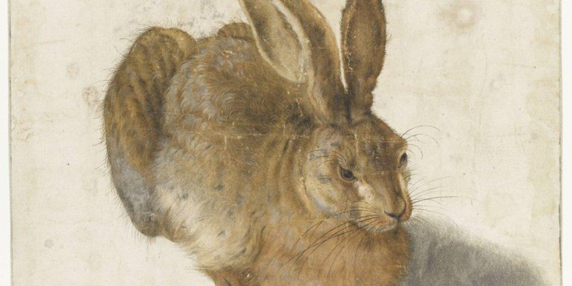 Dürer Hase Louvre