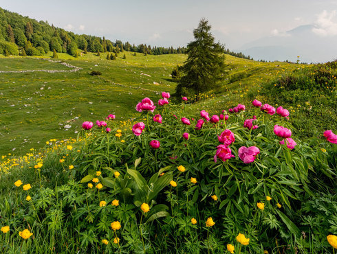 Frühling Monte
