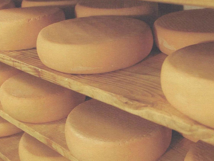Besondere Lebensmittel Käseproduktion