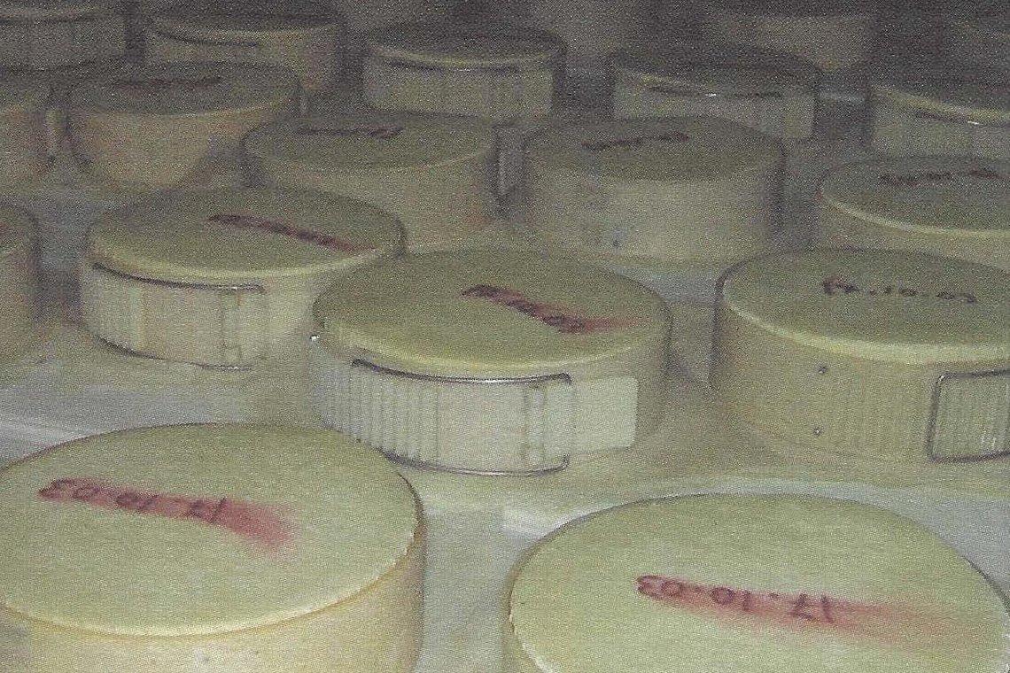 Besondere Lebensmittel Käse bei der Reifung