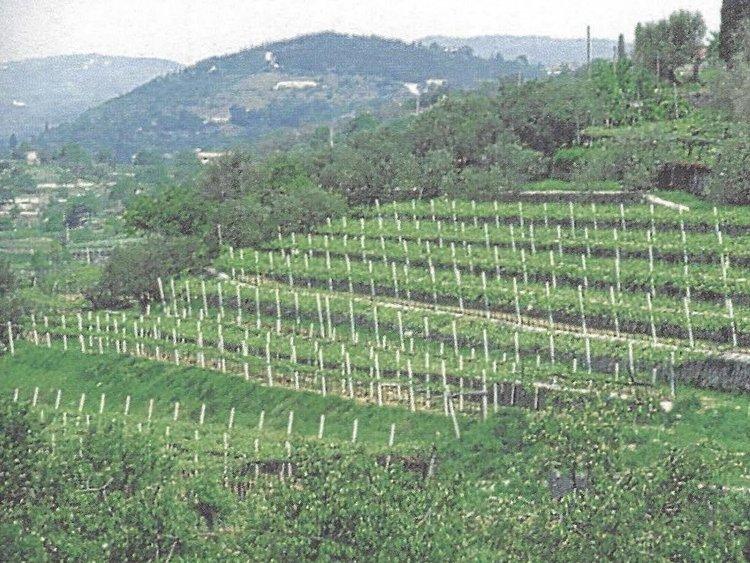 Besondere Lebensmittel Weinfelder