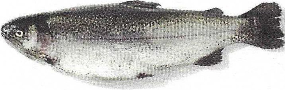 Farmed fish species