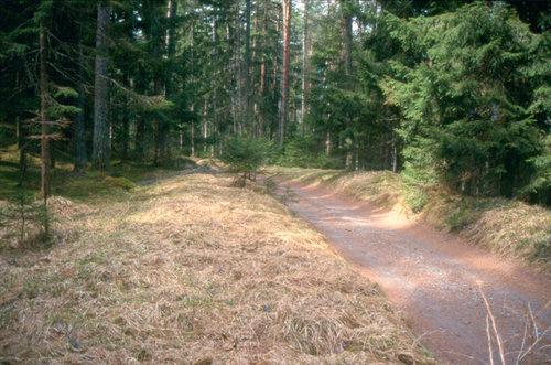 Original Trasse Strader Wald