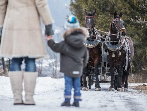 Winter Pferdeschlittenfahrt