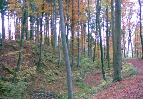 Heldenburg Wald Platschka