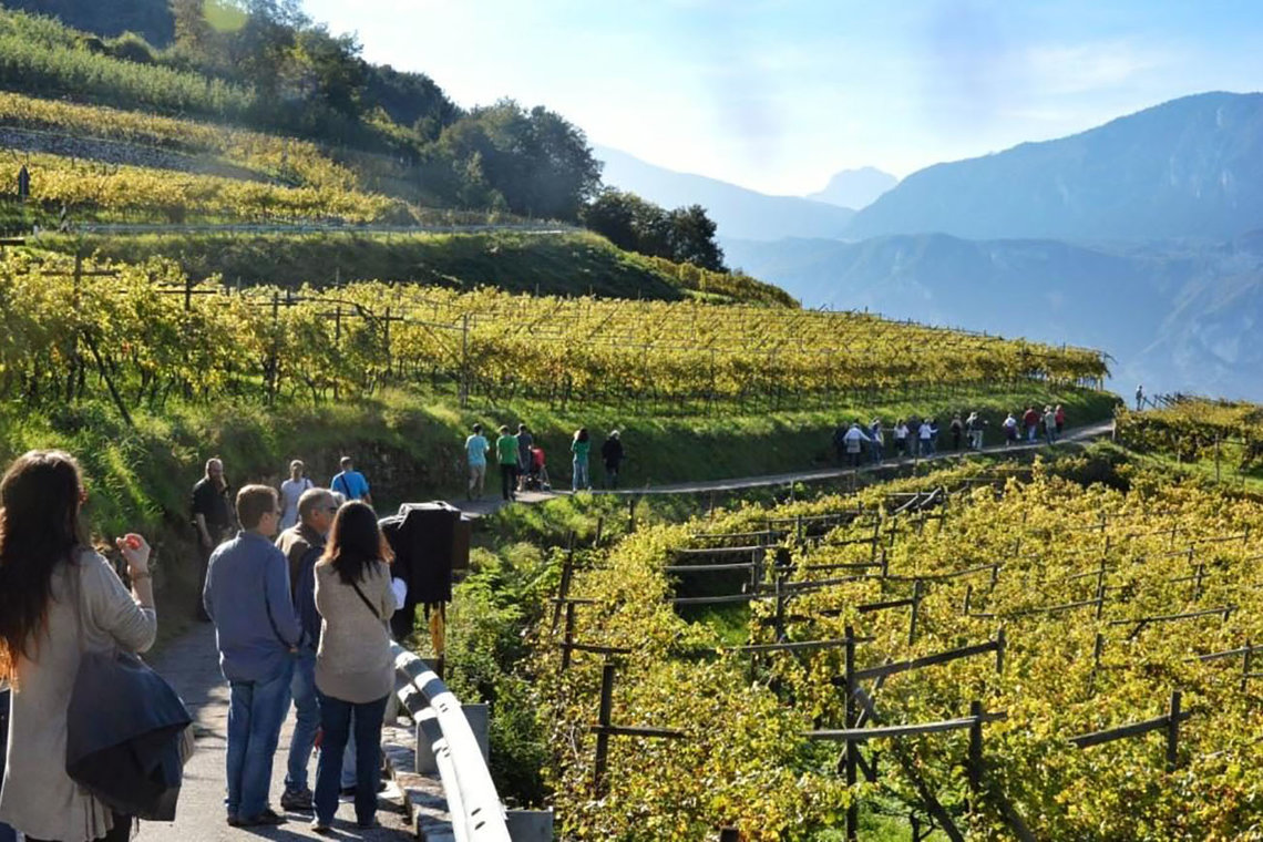 Strada Vino Trentino