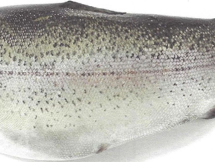 Besondere Lebensmittel Fisch