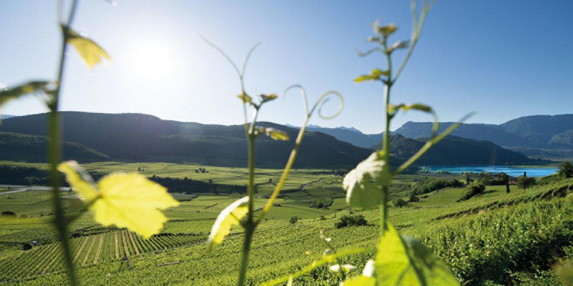 Kaltern Wein See
