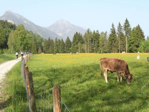 Radweg zwischen Füssen und Pinswang