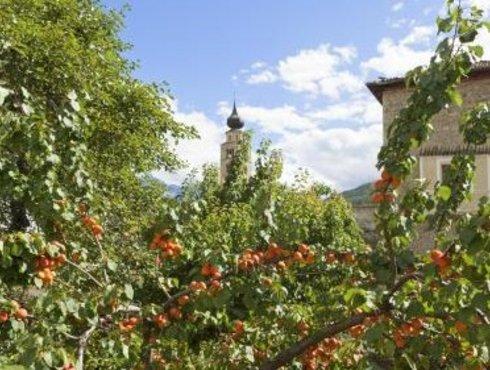 Vinschger Apfel
