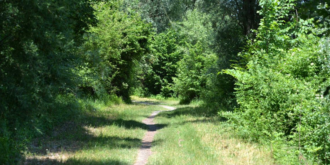 Augsburg Stadtwald Wanderweg