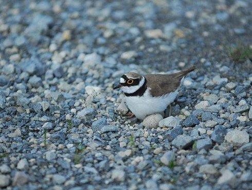 Frühling Vogel