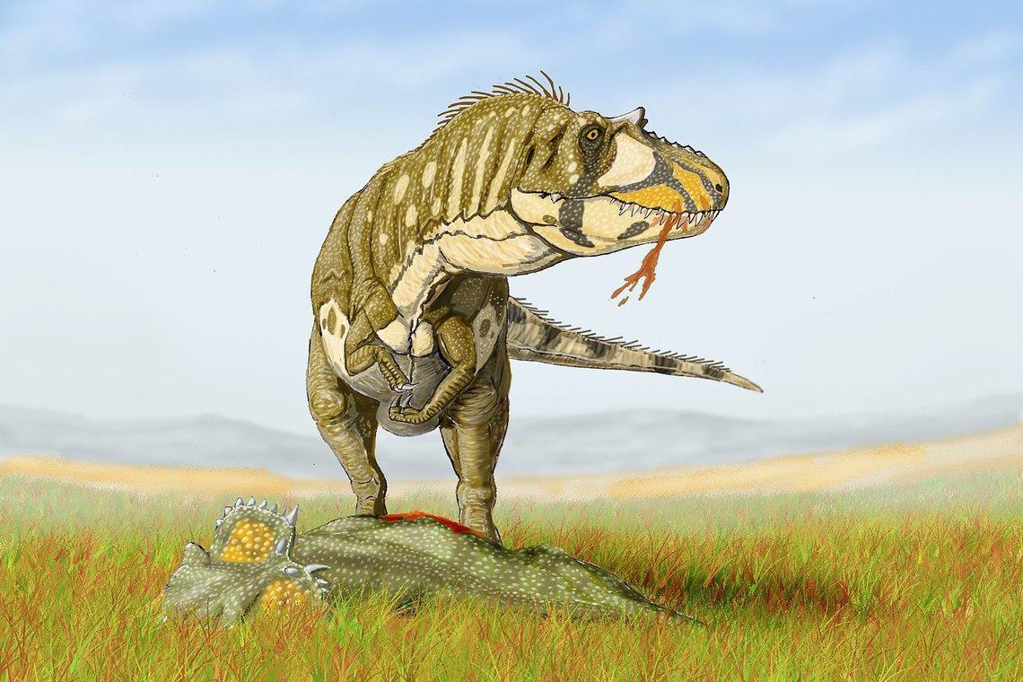 Daspletosaurus Gruppe Der Fleischfressenden Theropoden
