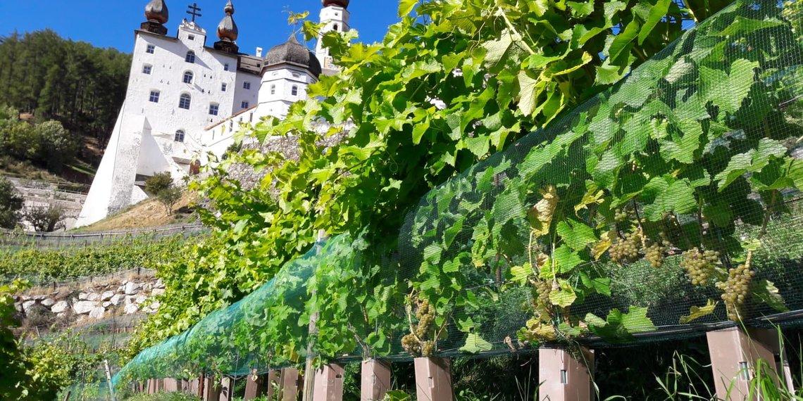 Kloster Marienberg Wein