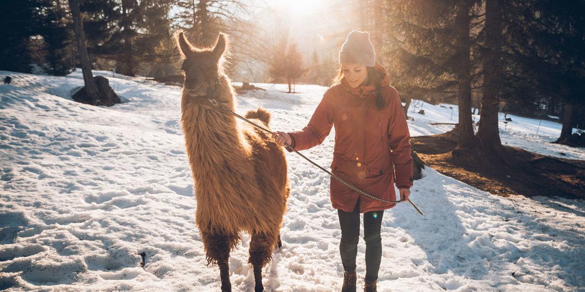 Winter Lamawandern