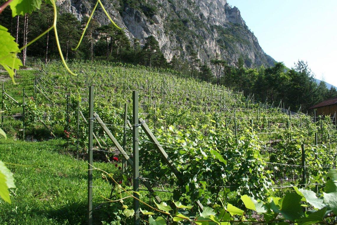 Wein Nordtirol