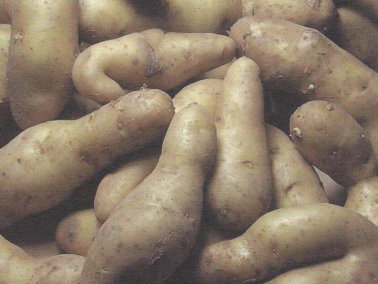 Besondere Lebensmittel Kartoffeln