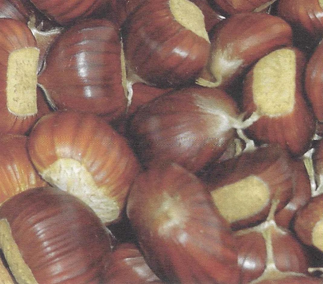 The Feltrine chestnut