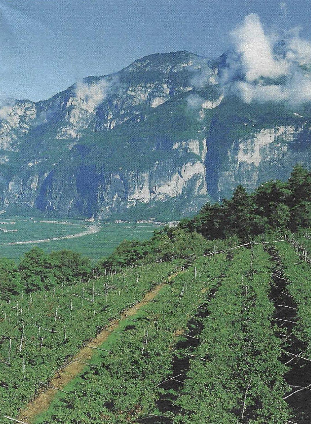The most beautiful vineyard in Europe